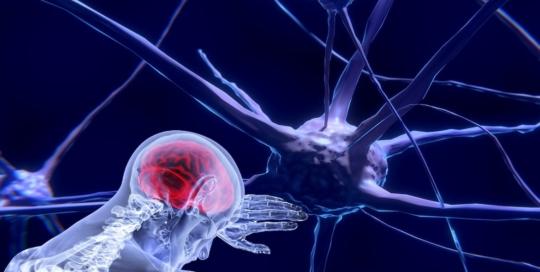 neurons-3743011_1920