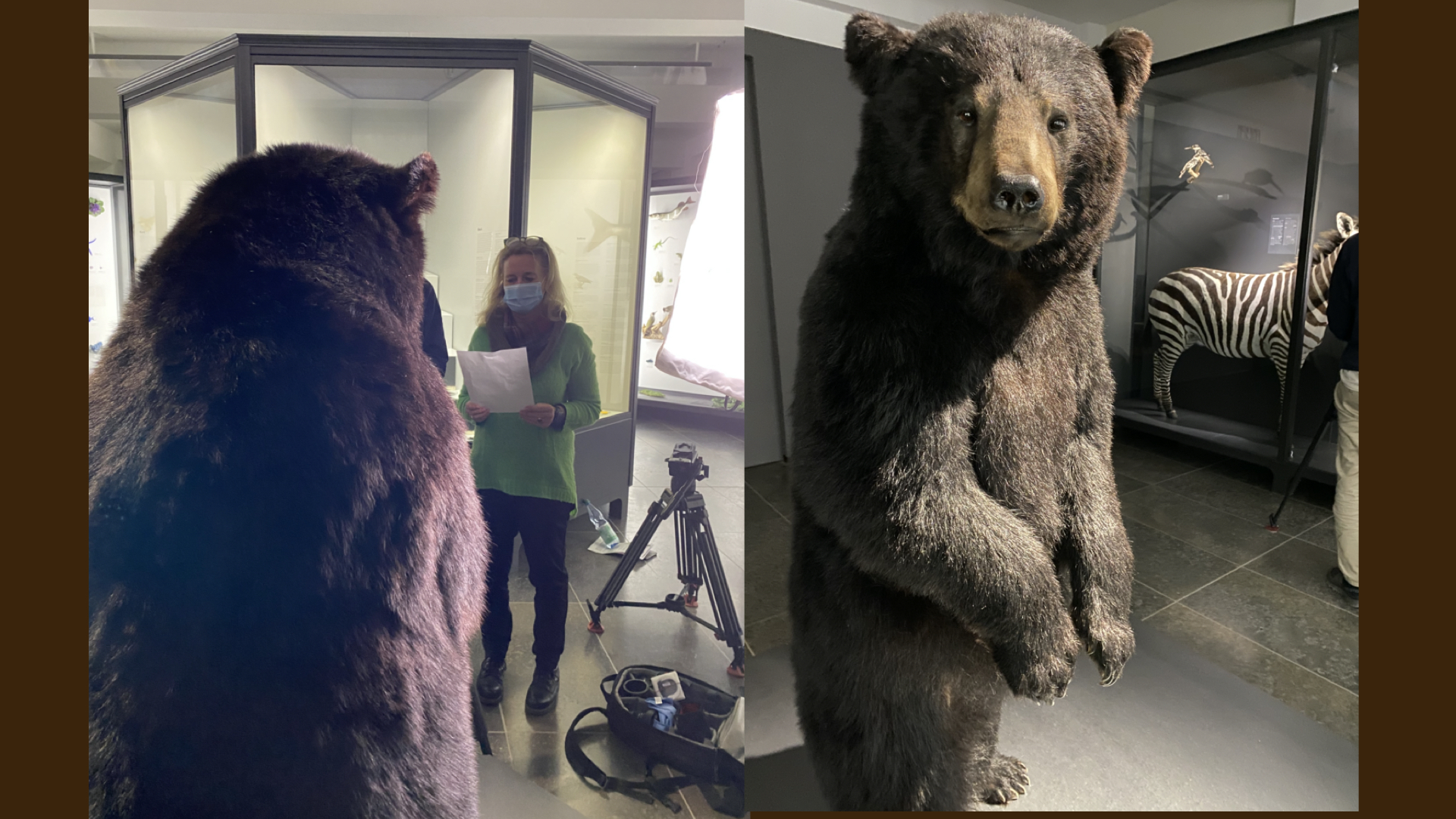 Bäreninterview